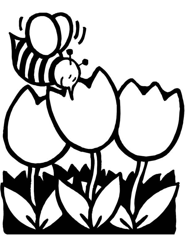 Spring, : Bee on Tulips Flower on Spring Time Coloring Page
