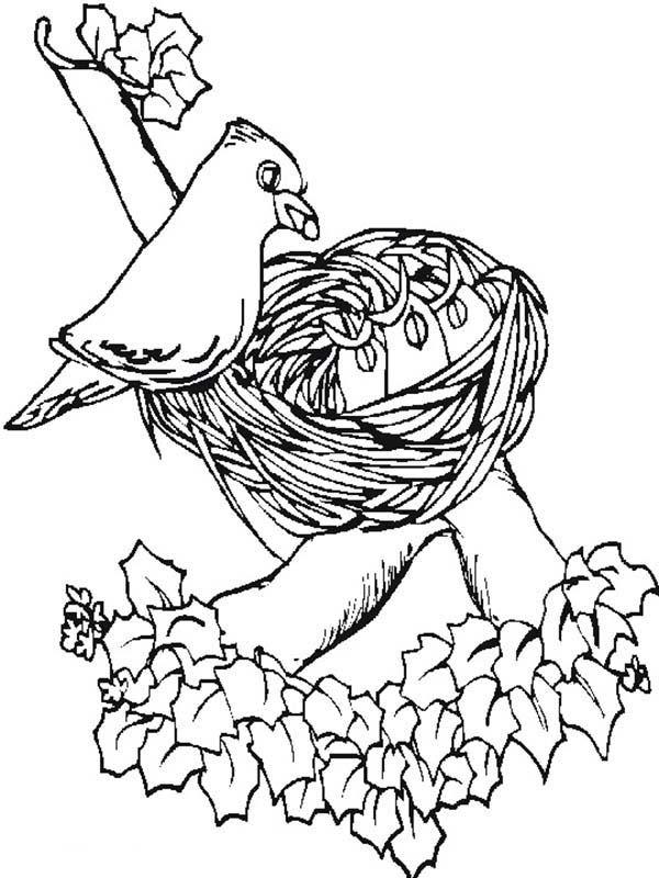 Spring, : Bird Feeding Her Babies in Spring Coloring Page