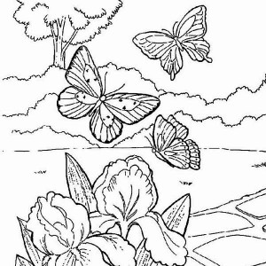 butterflies looking for spring flower coloring page