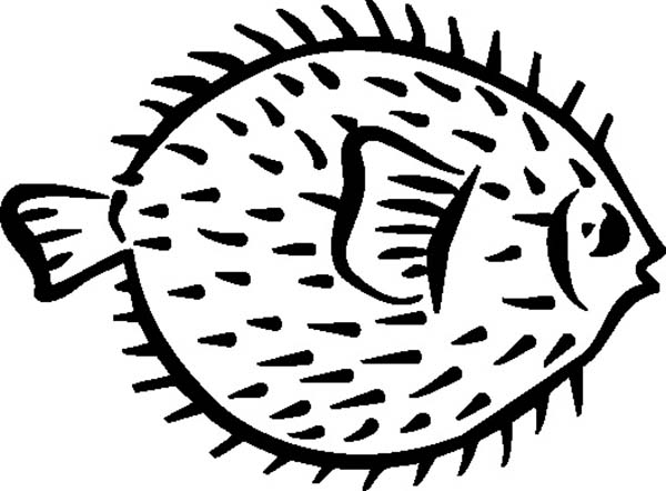 Puffer Fish, : Puffer Fish Coloring Page