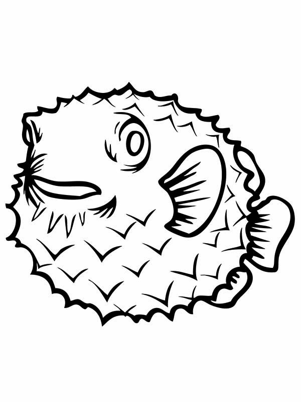 Puffer Fish, : Puffer Fish is Clumsy Swimmer Coloring Page