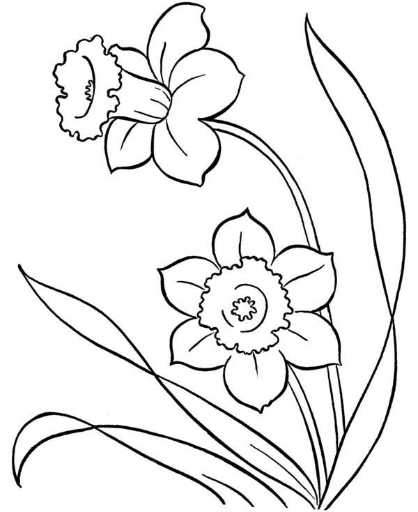 Spring, : Spring Flower Growing Coloring Page