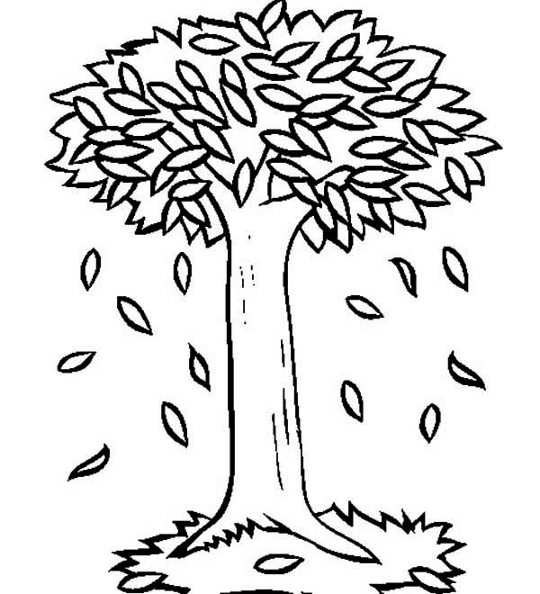 autumn big trees in autumn with autumn leaf coloring page - Tree Leaves Coloring Page