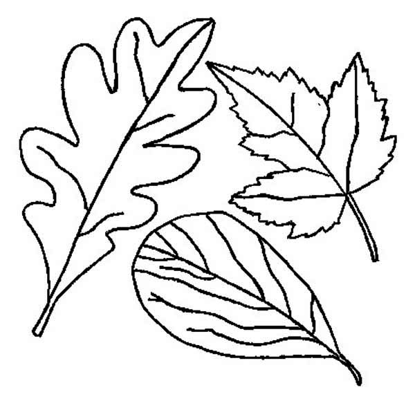 Autumn, : Drawing of Autumn Leaf Coloring Page