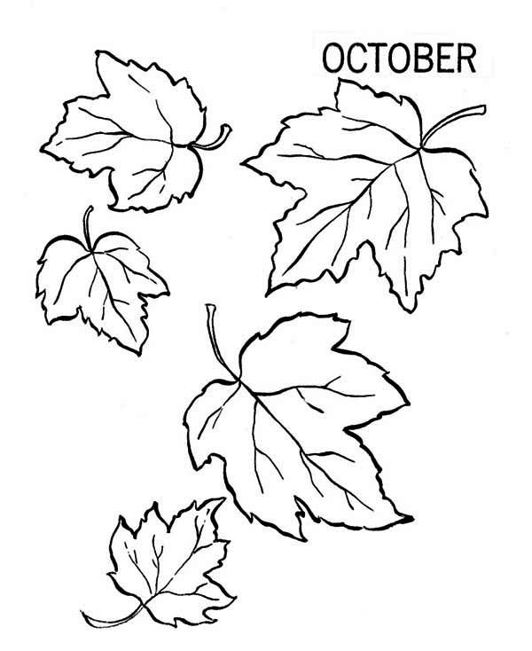 Autumn, : Lots of Autumn Leaf Coloring Page