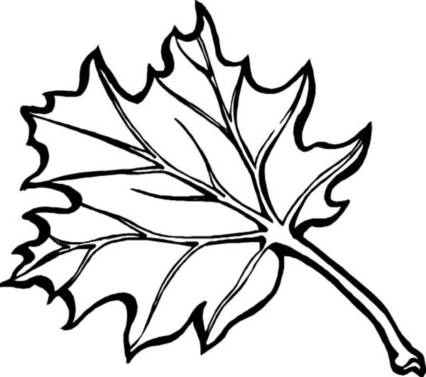 Autumn, : Maple Autumn Leaf Coloring Page