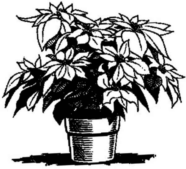 National Poinsettia Day, : A Perfect Decoration for National Poinsettia Day Coloring Page