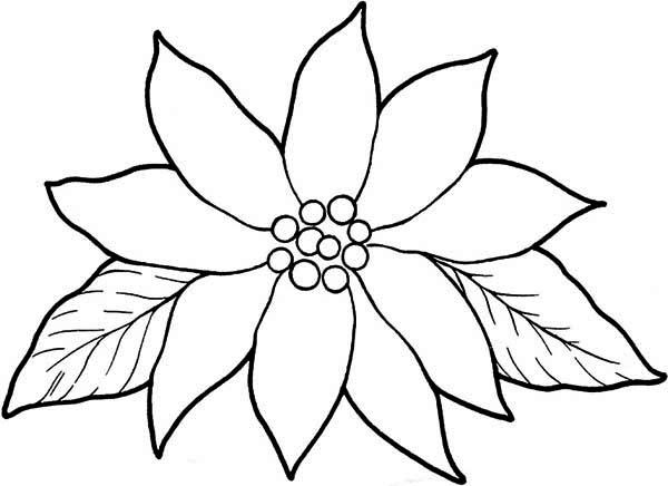 National Poinsettia Day, : Charming Poinsettia for National Poinsettia Day Coloring Page