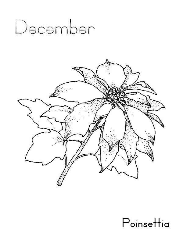 National Poinsettia Day, : National Poinsettia Day on December Coloring Page