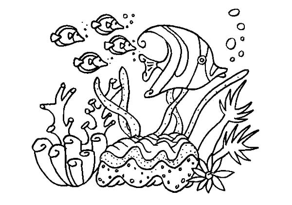 a group of fish in coral reef sea coloring pages