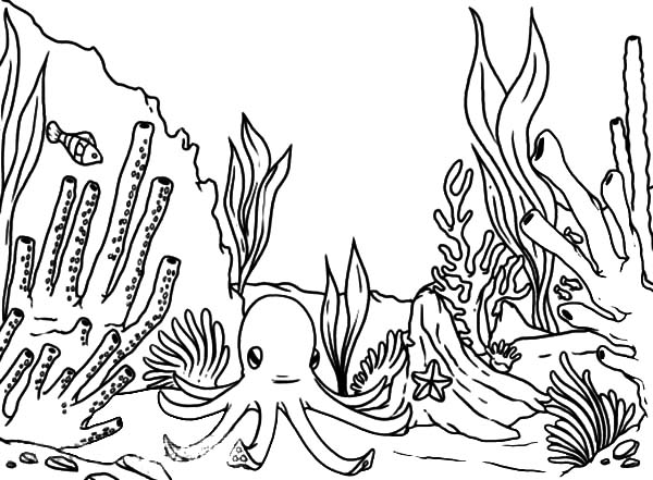 coral reef coloring book pages - photo#24