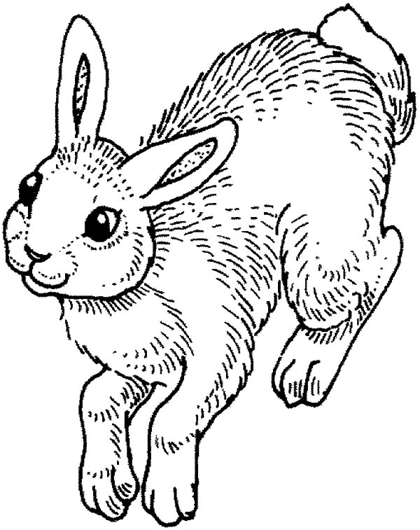 Hopping Bunny, : Awesome Bunny is Hopping Coloring Pages