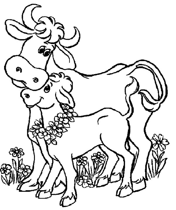 Cows, : Baby Cows and Her Mother Coloring Pages