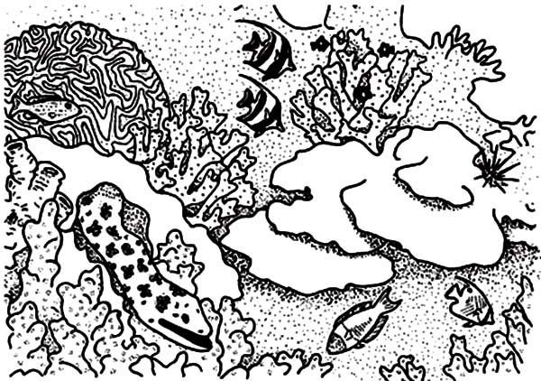 Coral Reef Fish, : Beautiful Coral Reef for Sea Fish Coloring Pages