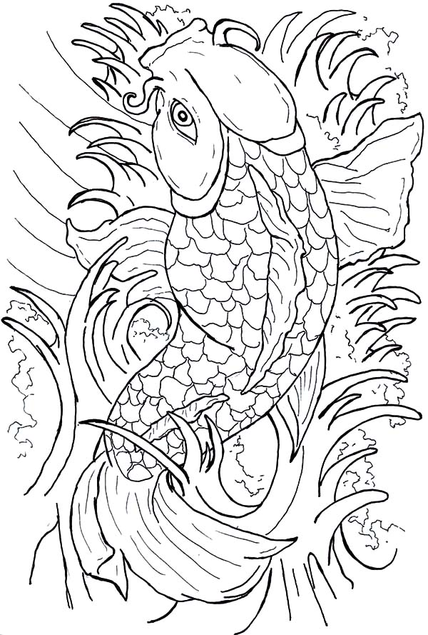 Coy Fish, : Beautiful Japanese Coy Fish Coloring Pages