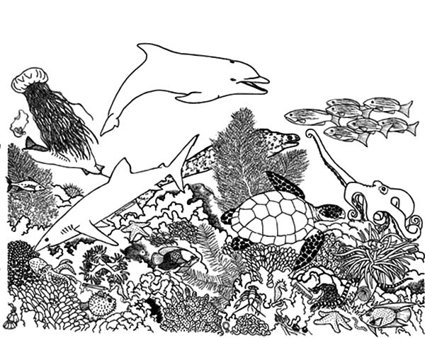 Coral Reef Fish, : Complex Coral Reef Ecosystem Fish Coloring Pages
