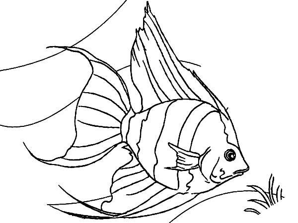 coral reef angel fish coloring pages