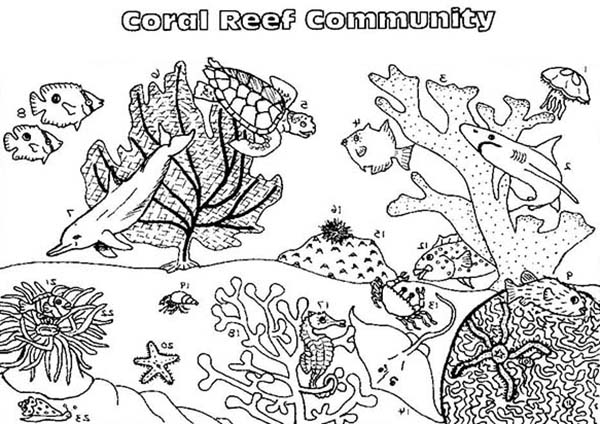 Coral Reef Fish, : Coral Reef Fish Community Coloring Pages