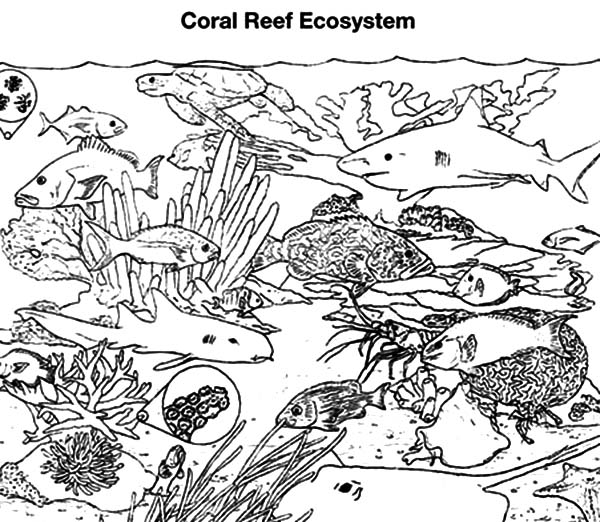 coral reef fish gathering coloring pages