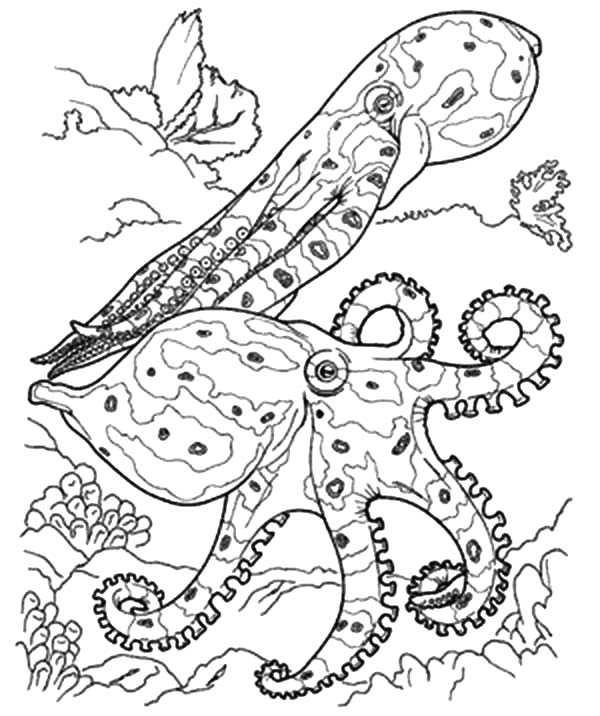 Coral Reef Fish, : Coral Reef Fish Predators Coloring Pages