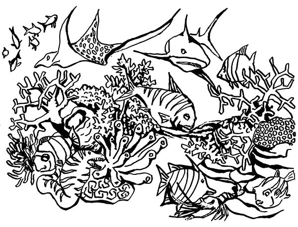 coral reef fish predators gathering coloring pages