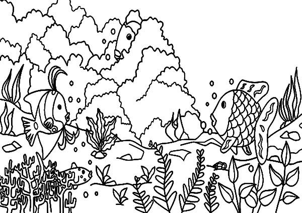 Coral Reef Fish, : Coral Reef Fish Underwater World Coloring Pages