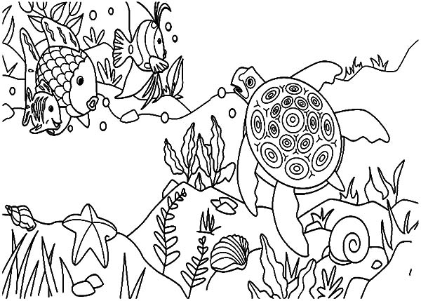 coral reef fish and sea turtle coloring pages