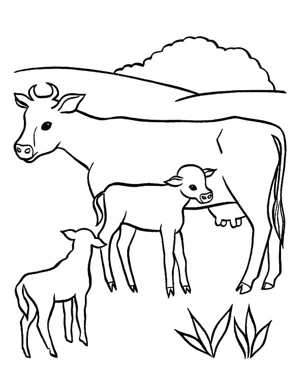 Cows, : Cows Breast Feeding Coloring Pages