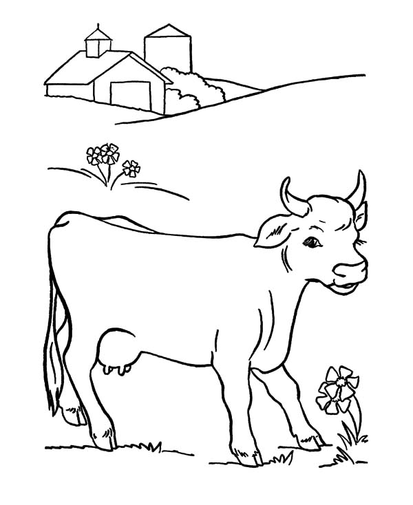 Cows, : Cows Favorite Flower Coloring Pages