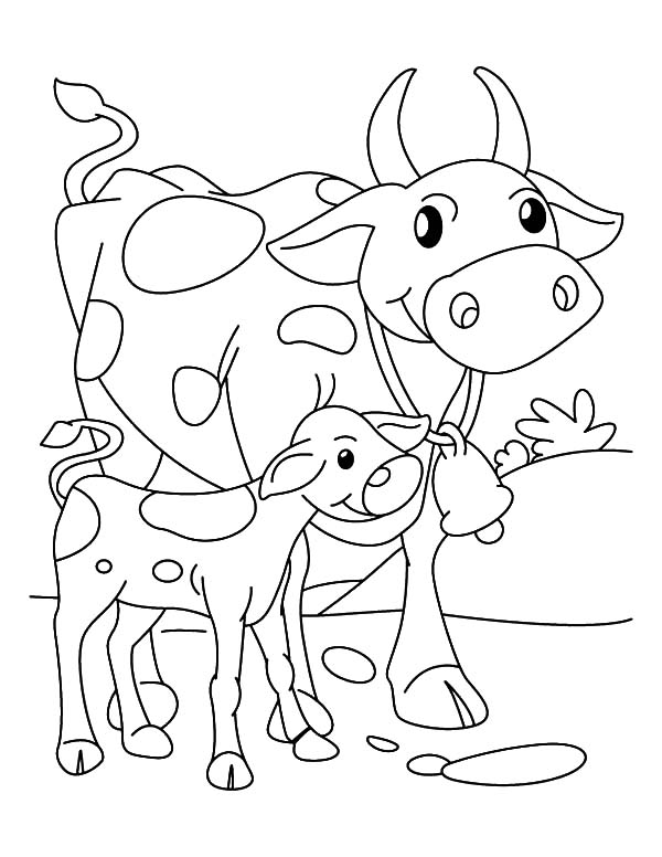 Cows, : Cows Walking Beside Her Calf Coloring Pages