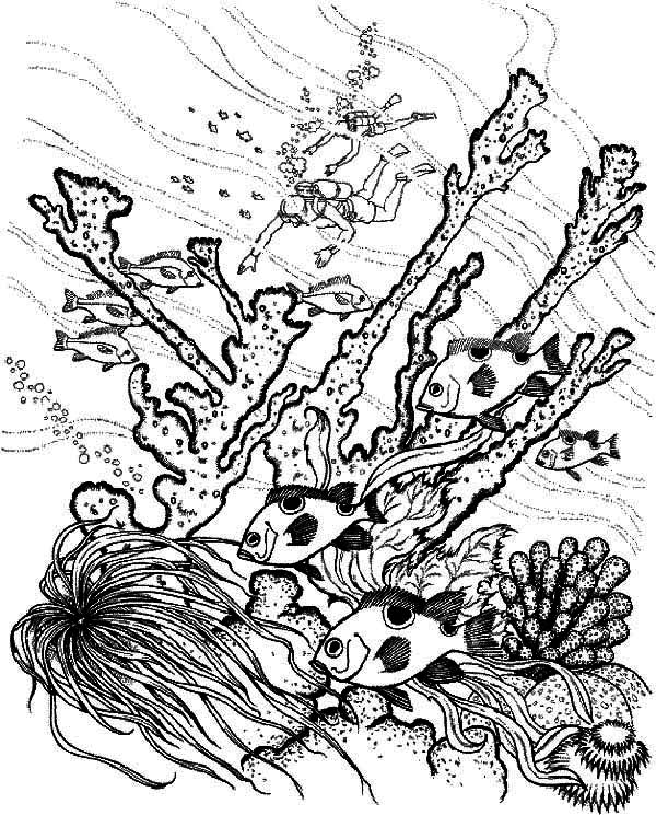 diver find coral reef fish coloring pages