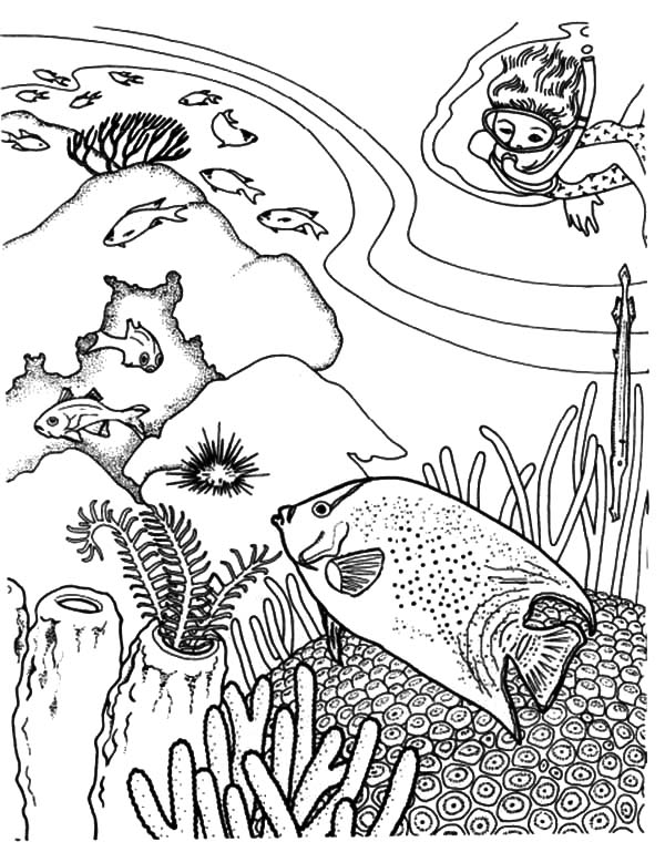 Coral Reef Fish, : Diving Enjoy Viewing Coral Reef Fish Coloring Pages