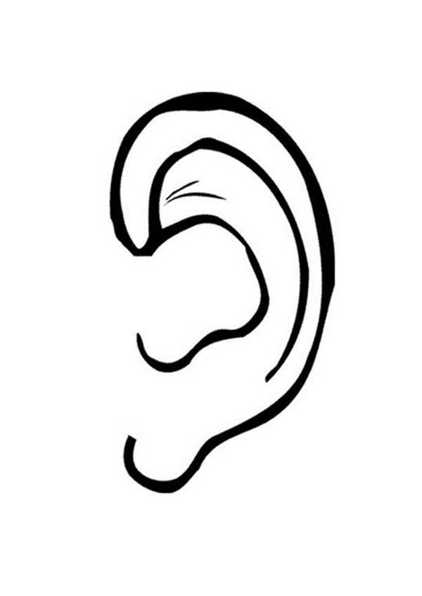 Ear, : Drawing Ear Coloring Pages