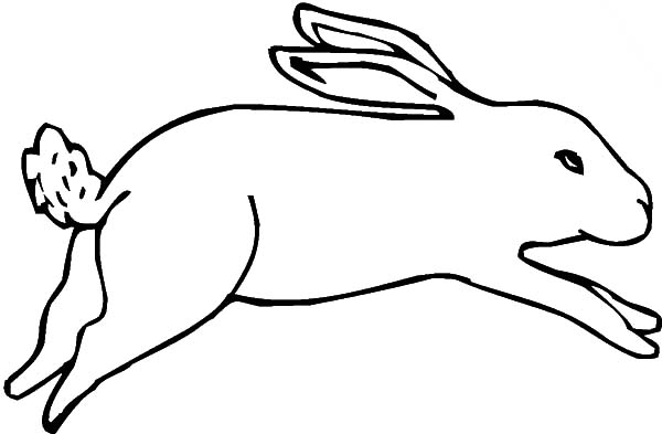 Hopping Bunny, : Drawing Hopping Bunny Coloring Pages
