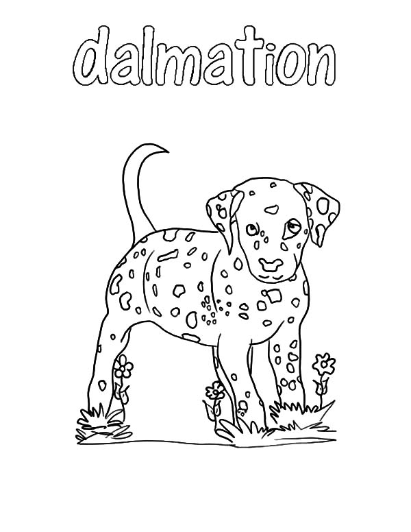 Fire Dog, : Fire Dog Dalmation Coloring Pages