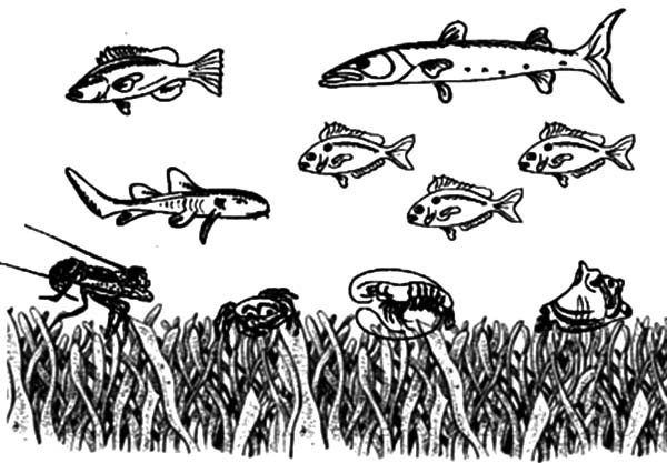 fish swimming over coral reef coloring pages - Coral Reef Coloring Pages Kids