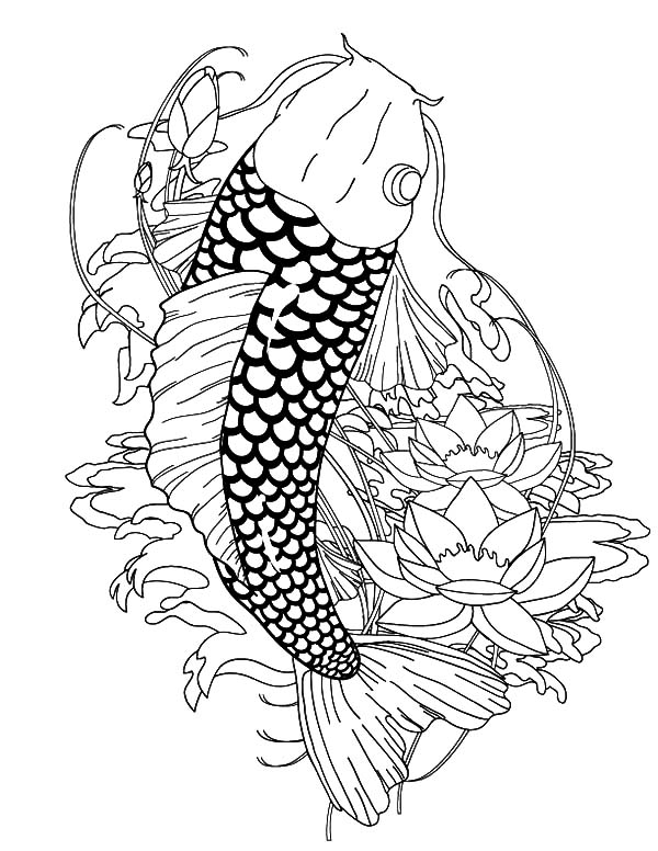 Coy Fish, : Heaven Coy Fish Coloring Pages