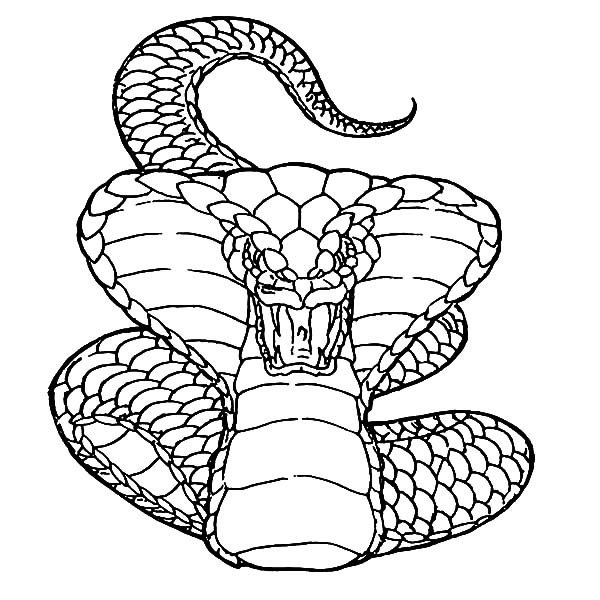 King Cobra, : King Cobra Deadly Attack Coloring Pages