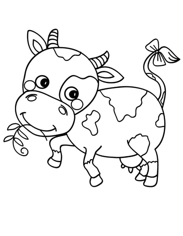 Cows, : Little Cows with Bow Tail Coloring Pages
