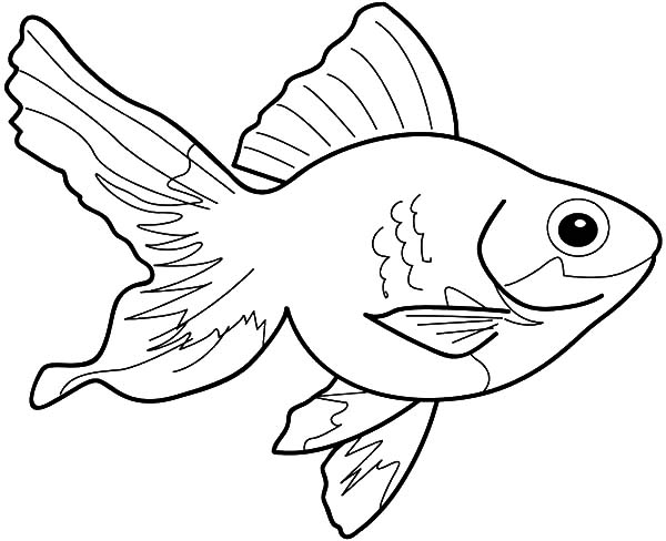 Coy Fish, : Little Coy Fish Coloring Pages