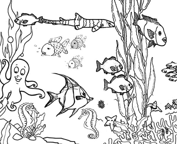 Coral Reef Fish, : Ocean Plants Among Coral Reef Fish Coloring Pages