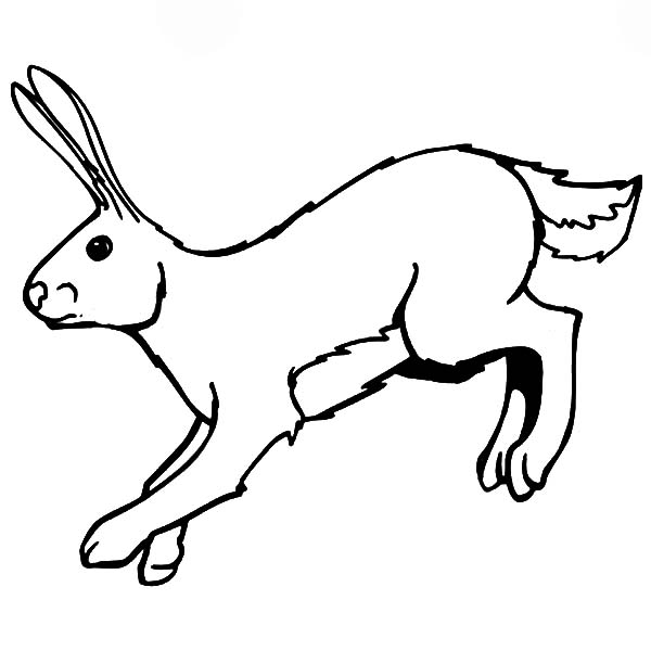 Hopping Bunny, : Picture of Hopping Bunny Coloring Pages