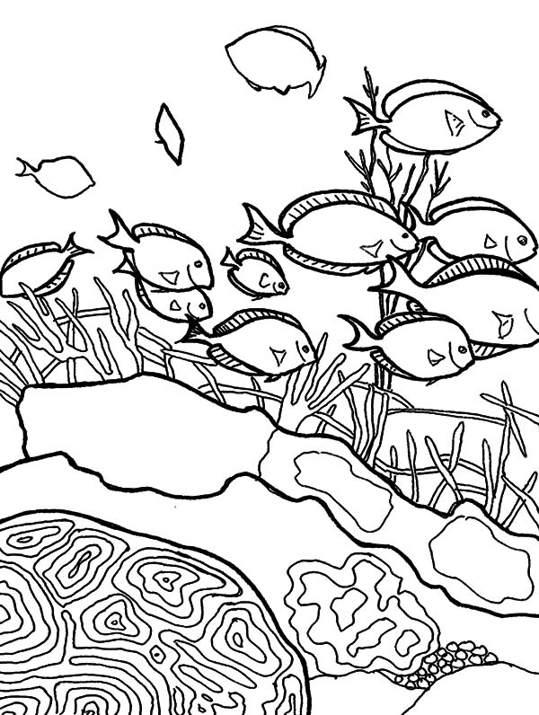 Coral Reef Fish, : School of Coral Reef Fish Coloring Pages