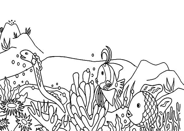 sea snake hunt for coral reef fish coloring pages