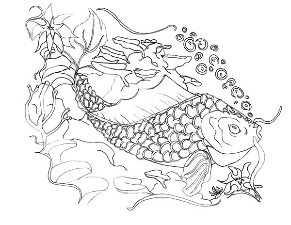 Coy Fish, : Sketch of Coy Fish Coloring Pages