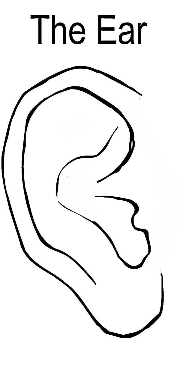 Ear, : The Ear Coloring Pages